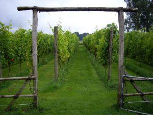 wijngaard-de-braoke-min